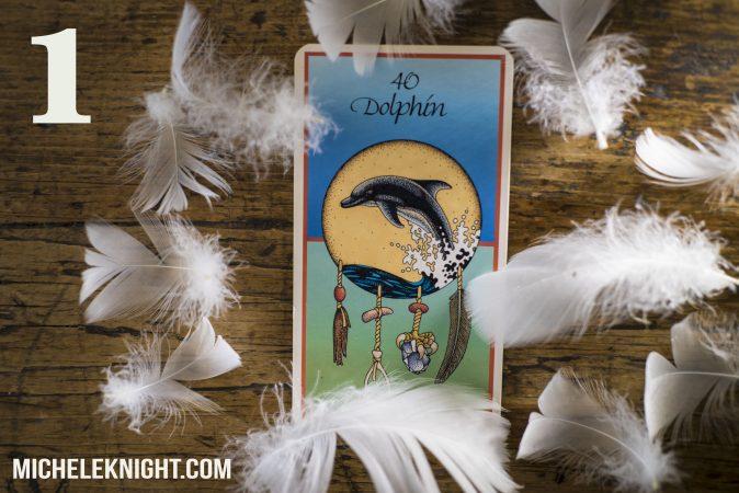 dolphin medicine card